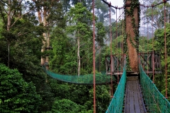 danum-valley-canopy-walk